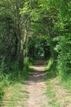 vallee-de-la-sarthe-chemin-creux-bois-cornuere - ©ADTVS