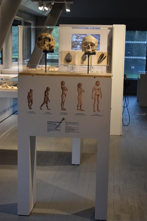 PCU53-Musee-prehistoire8©Musée de Préhistoire