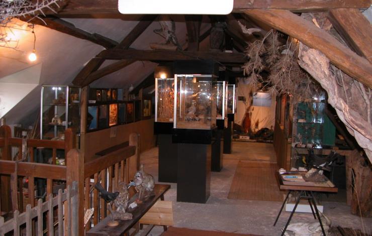 Petit Musée Faune Locale (4) (Large)