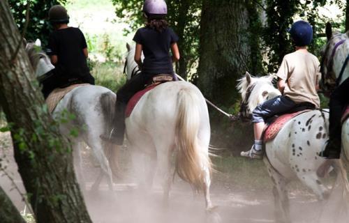 Vallee-de-la-sarthe-chevaux-mesangeres-iti-72